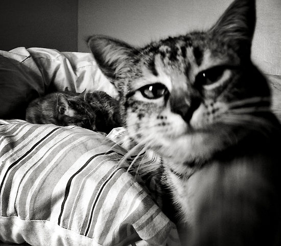 563187-3-boo-the-cat