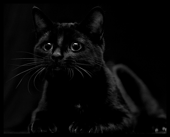 baby-black-cat | Boyofbows Weblog