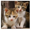 brother_and_sister_by_komar_cica