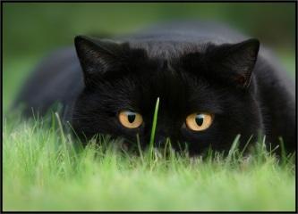cats_31