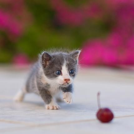 Cherry By Serhatdemiroglu