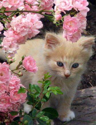 cute-cat-pet-cat
