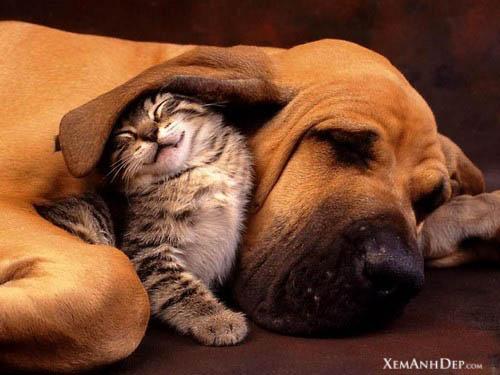 cute_kitten04