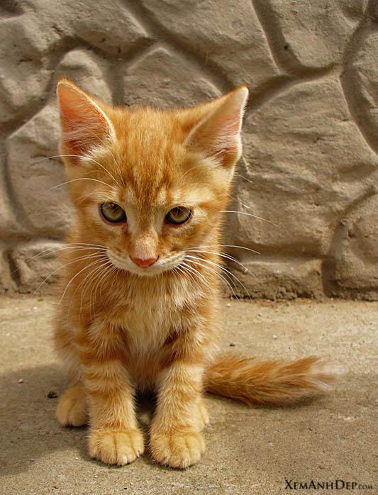 Cute Kitten VI
