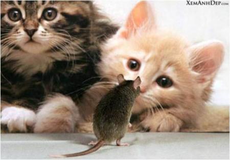 cute_kitten07