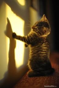 Cute Kitten XI