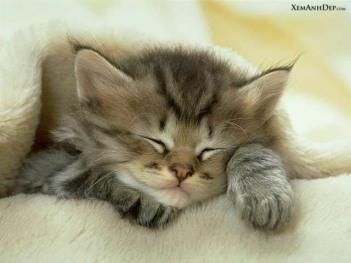 cute_kitten13