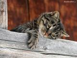 cute_kitten14