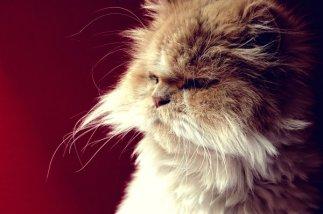 Leon_the_cat_by_mademoiselle_monique