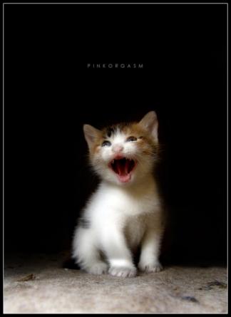 pussy_knight_by_pinkorgasm