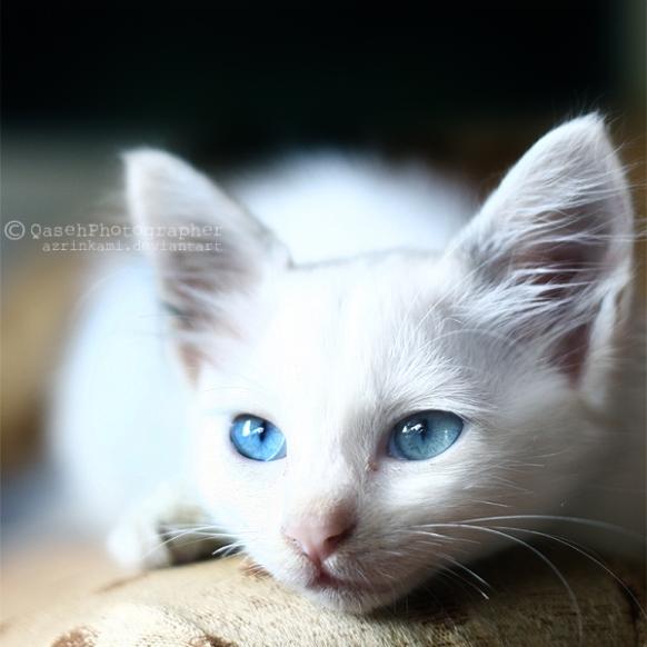 white_ii_by_azrinkami