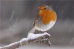 vom Schnee berieselt  von Stevie 65