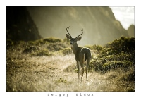 Calm Colours For A Calm Deer