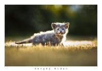 Flameable Kitty