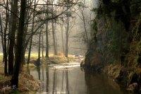 My Secret Forest