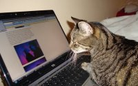 The Web Surfing Cat