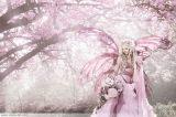 Cherry Fairy